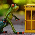imagen de rana viajar sola