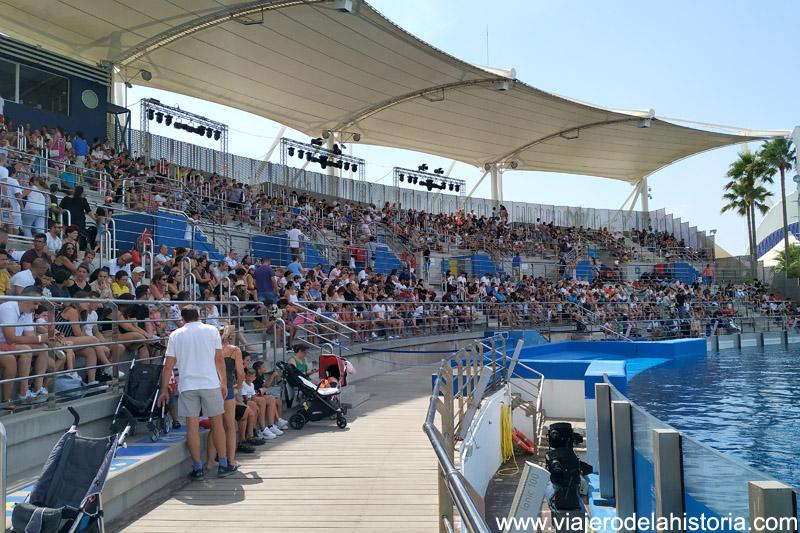 Delfinario del Oceanogràfic, Valencia