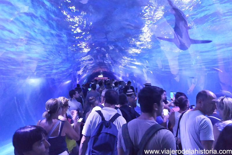 Acuario de tiburones en el Oceanogràfic, Valencia