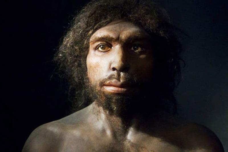 Paleolítico Inferior: Homo Antecessor